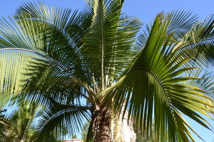 palm tree service San Diego