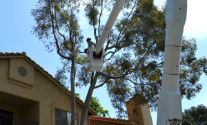 Tree Removal Cost San Diego