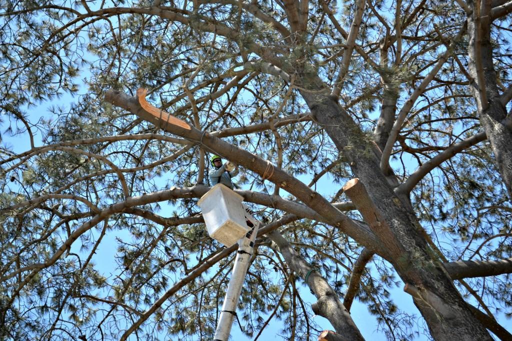 Tree Removal Carlsbad, CA