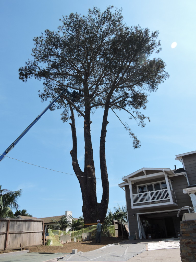 Tree Removal Carlsbad, CA