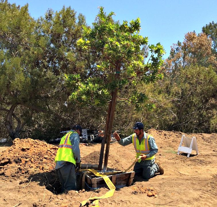 Tree Planting San Diego