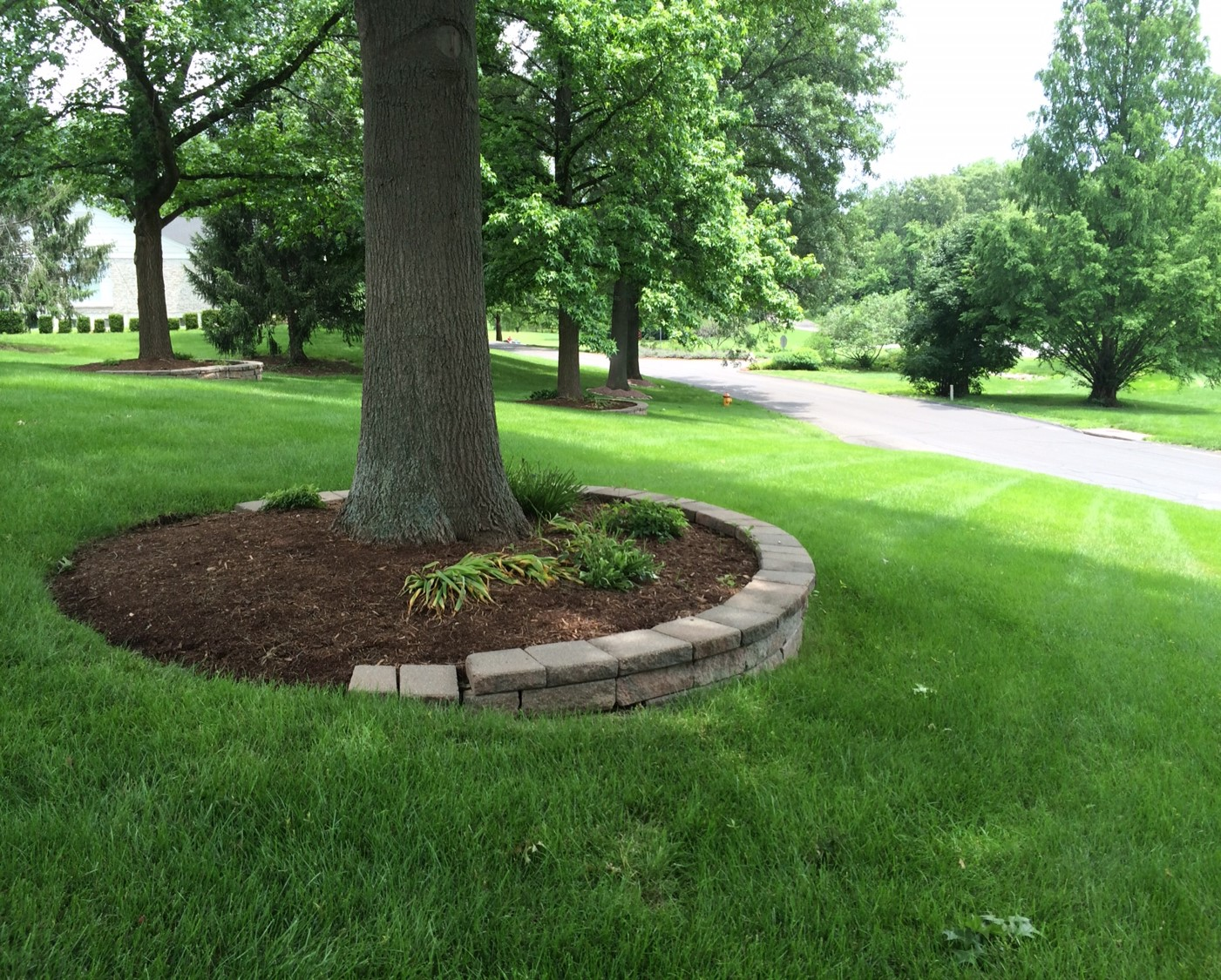 How to apply mulch to your trees emma tree service for Around the tree