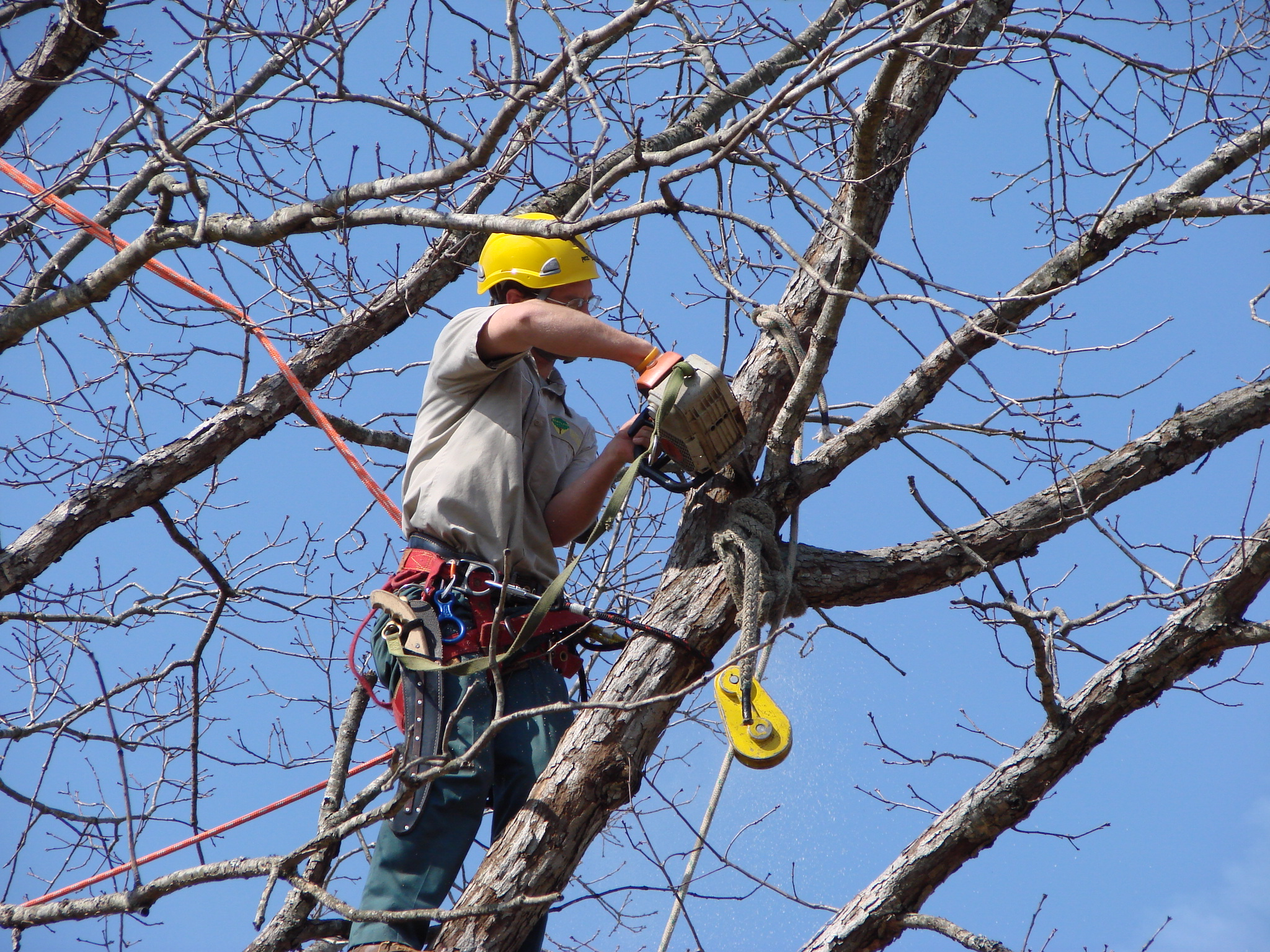 Tree Pruning San Diego