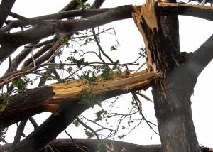 Tree Service San Diego