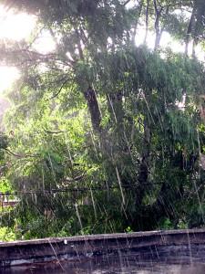 San Diego Tree Service