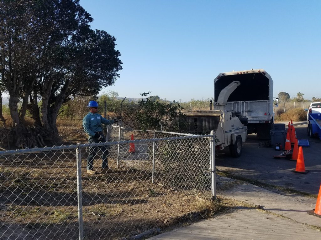 Tree Removal South San Diego