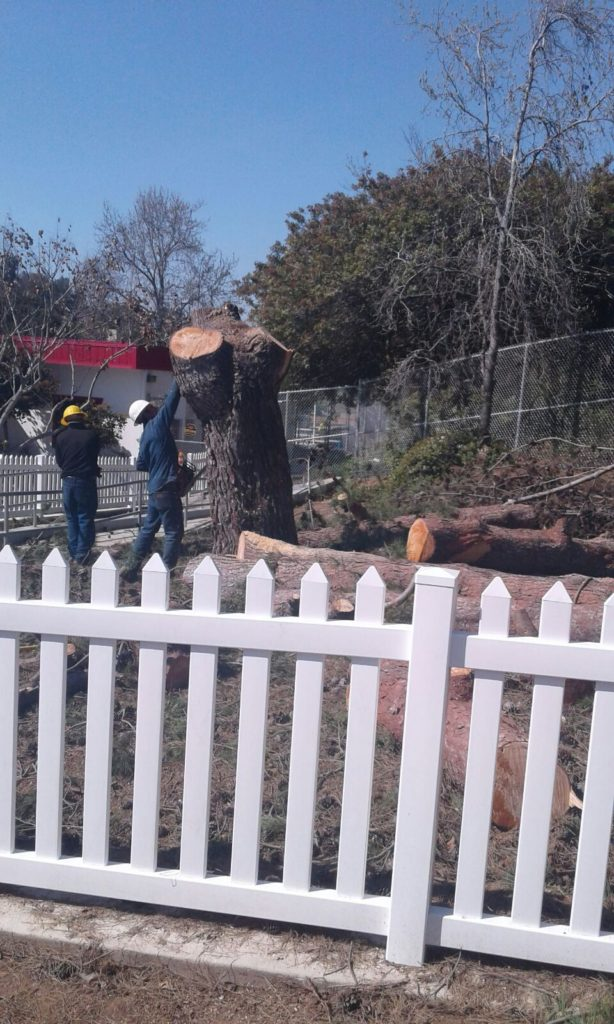 Pine Tree Removal - National City, Ca