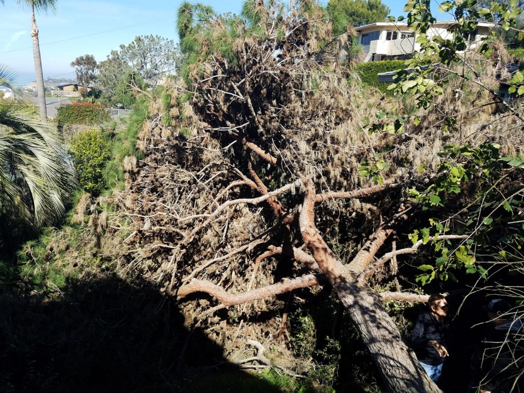 Tree Removal in Del Mar, CA