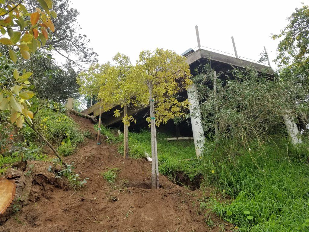 Tree Planting in Del Mar, CA
