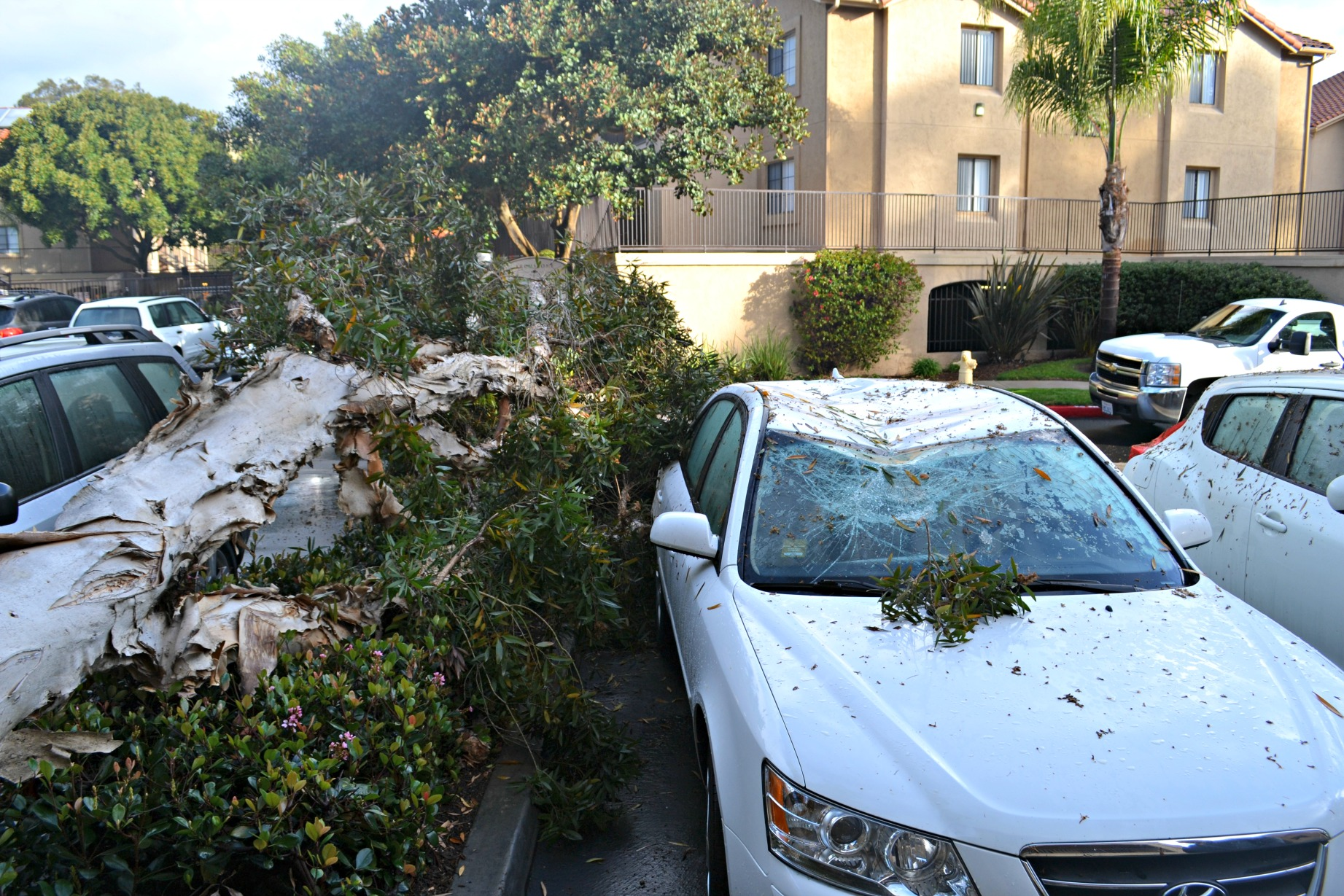 Tree Problems San Diego