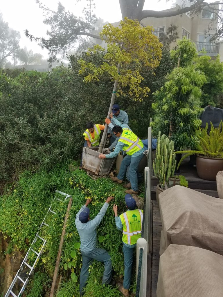 Tree Planting in Del Mar, CA